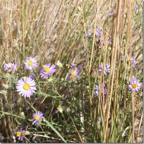 mvflowers