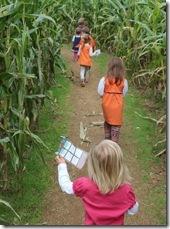 cornfield1