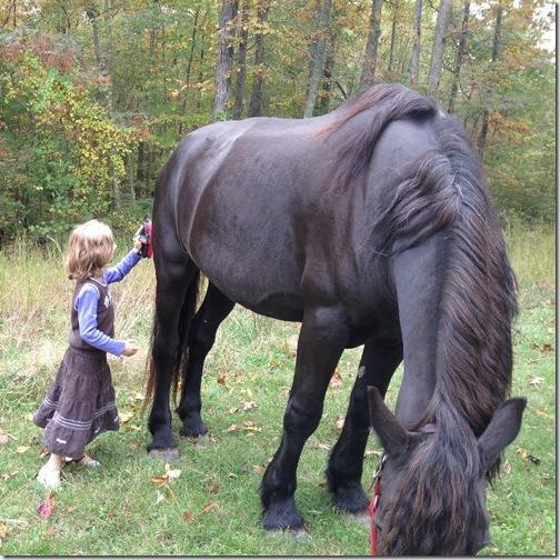 horsegrooming